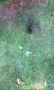 Sink hole in the property.